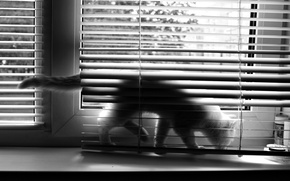 Picture blinds, window, BW, cat