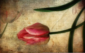 Wallpaper letter, style, background, Tulip