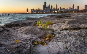 Picture lights, sheet, lake, stone, building, post, Chicago, Il, bokeh, Plant