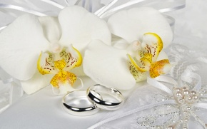 Picture flowers, ring, lace, white, orchids, bow, Orchid, Jewelry, Ring
