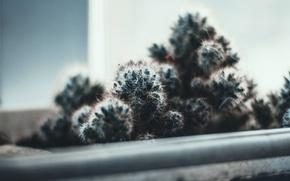Picture light, needles, needle, plant, cactus, barb, window, cool colors