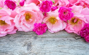 Picture bright, roses, colorful, pink, roses