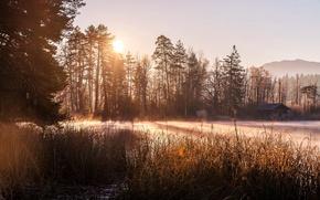 Wallpaper fog, lake, morning