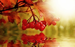 Picture autumn, water, nature, berries, collage, Kalina