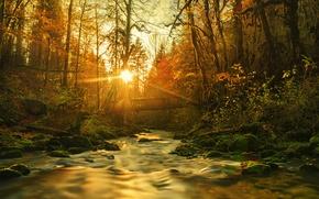 Picture forest, the sun, bridge, river