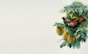 Picture bird, minimalism, branch, East, master, art, painting