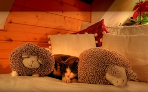 Picture cat, pillow, sleeping, curls, sheep, on the bed, attic, soft toys, bombski