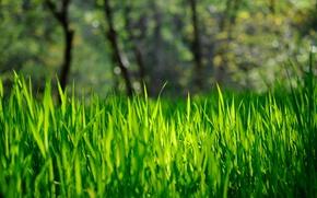 Picture grass, green, bokeh, spring-summer