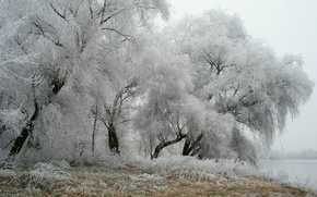 Wallpaper winter, frost, trees, Park, Germany