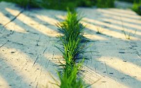 Picture greens, summer, grass, macro, Board, grass