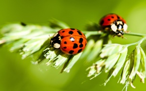 Wallpaper insects, ladybugs, plants