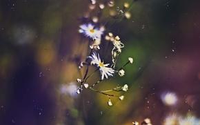 Picture autumn, macro, dark, chamomile, scratches