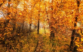 Picture road, autumn, forest, nature, color