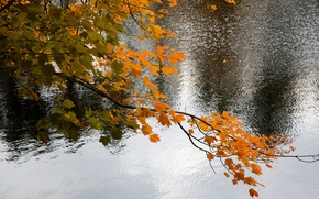 Picture autumn, leaves, water, lake, branch