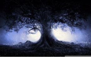 Picture forest, tree, the darkness