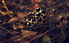 Picture autumn, leaves, heart, pendant, chain, heart, suspension