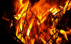 Picture night, fire, flame, the fire