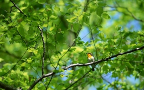 Picture forest, branches, tree, bird, foliage