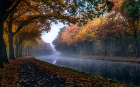 Wallpaper autumn, trees, nature, foliage, channel, haze