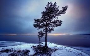 Picture landscape, tree, Sweden, Bergvik, Varmland