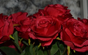 Picture roses, red, a lot