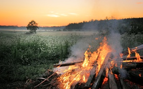 Picture field, trees, nature, fire, the evening, the fire, halt