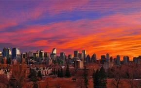 Picture city, Alberta, Canada, skyline, trees, sunset, park, skyscraper, tree, houses, Calgary, buildings, skyscrapers
