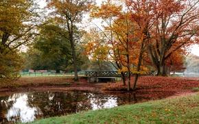 Picture autumn, leaves, trees, bridge, pond, Park, Germany, deer, Wildlife Park, The dulme