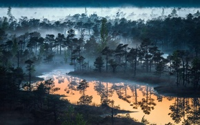 Wallpaper forest, the sky, nature, fog, lake, river, forest