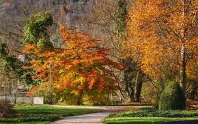 Picture autumn, trees, track, Autumn