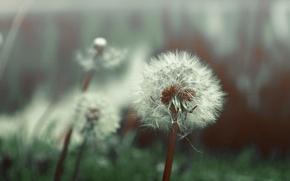 Picture macro, fluff, dandelions