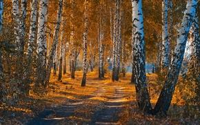 Picture road, autumn, forest, leaves, landscape, nature, beauty, birch