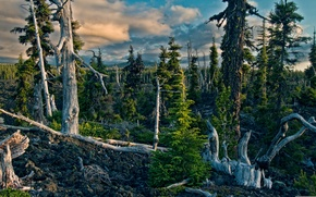 Picture forest, the sky, mountains, nature, driftwood