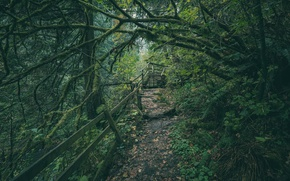 Picture forest, trees, path, Washington, Washington, Green River Gorge, River gorge, green river