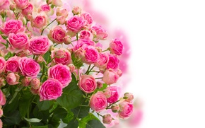 Picture flowers, roses, bouquet, buds, flowering