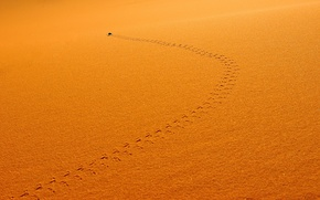 Wallpaper sand, trail, insect