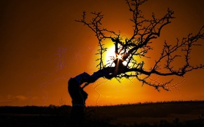 Wallpaper the sun, branches, Tree