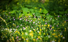 Picture summer, flowers, nature, glade, bokeh, blurred