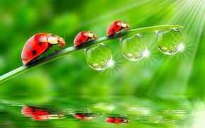 Wallpaper BACKGROUND, ROSA, WATER, DROPS, GREEN, TRIO, REFLECTION, SURFACE, LIGHT, STEM, RAYS, THREE, LADYBUG