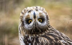 Wallpaper owl, bird, look