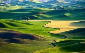 Wallpaper field, USA, carpets.greens