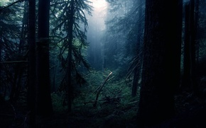 Picture forest, light, night