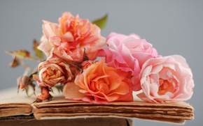 Picture flowers, books, roses, old, dry, pink, orange, page