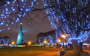 Picture winter, lights, Park, tree, lights, garland, square, night, park, winter, New Year, garland