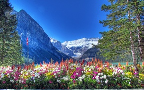 Picture the sky, snow, trees, flowers, mountains, lake, flowerbed, canada, alberta, banff national park