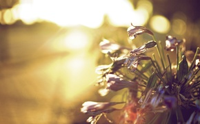 Picture leaves, the sun, flowers, background, widescreen, Wallpaper, wallpaper, flowers, flower, widescreen, background, full screen, HD …