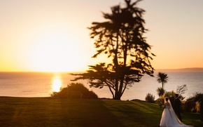 Picture sunset, tree, the bride, the groom