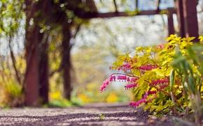 Wallpaper focus, flowers, Park, nature, the bleeding heart, pink, bokeh, track
