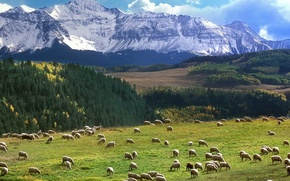 Wallpaper pasture, Field, mountains
