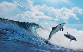 Picture sea, water, the ocean, wave, sky, sea, ocean, blue, splash, wave, dolphins